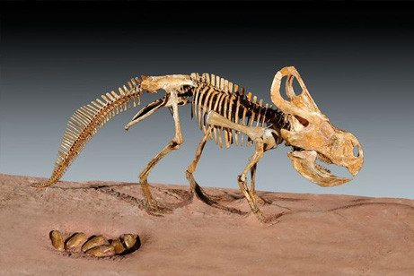 dinosaur-nest-discovered-protoceratops-file_44449_big