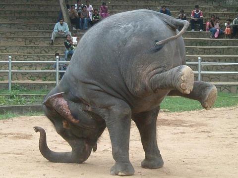 ゾウのダンスショー2