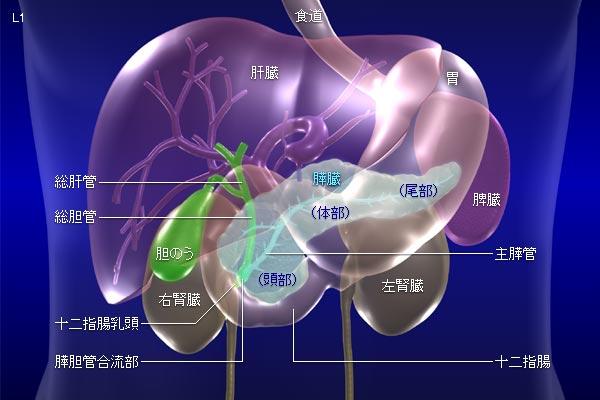 pancreas01