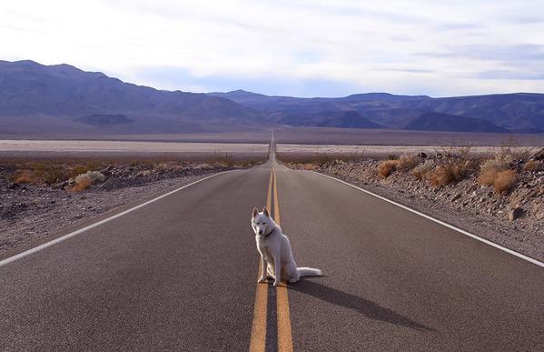canine11