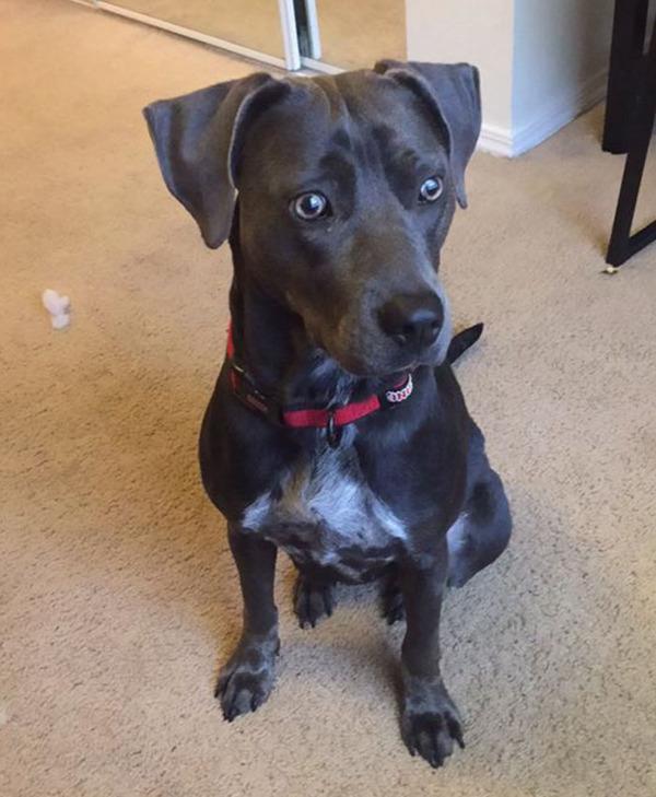 大学の授業に飼い犬を入れることが許された理由