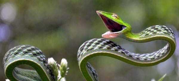 cute-snakes-24