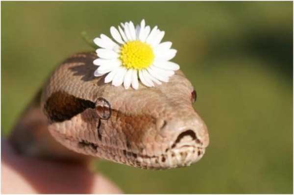 cute-snakes-27