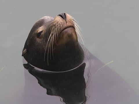 SeaLion-MorroBay-MikeBairdFlickr