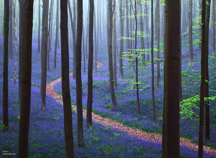 beautiful-mysterious-forests-8__880