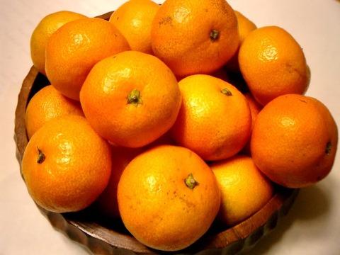 Citrus_unshiu-温州蜜柑-3