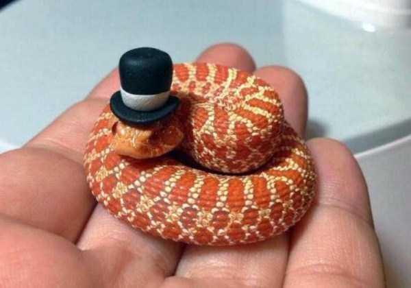 cute-snakes-9