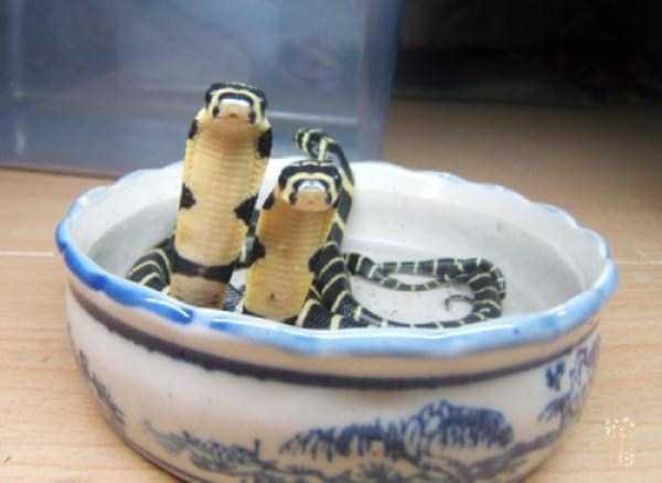 cute-snakes-30