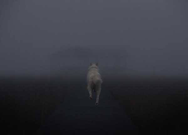 canine9