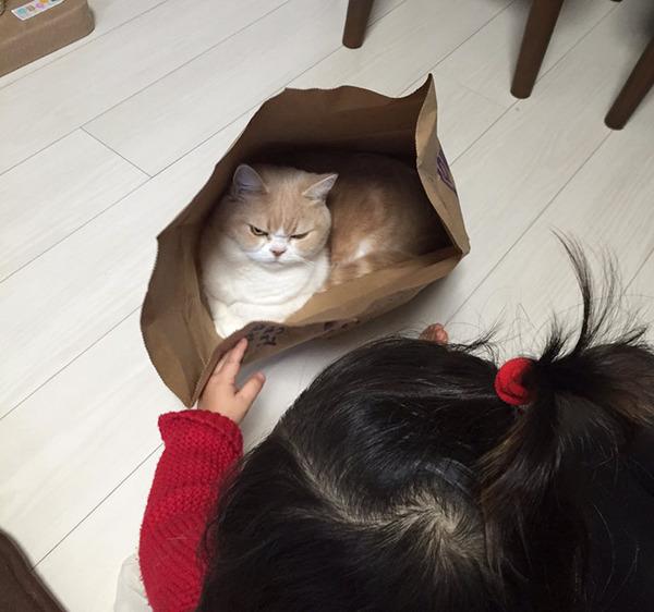 japanese-grumpy-cat-angry-koyuki-moflicious-33