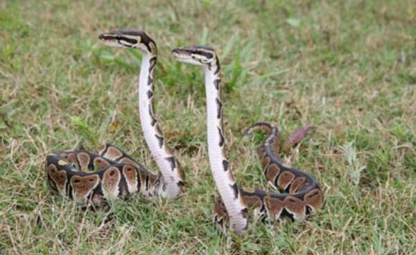 cute-snakes-6