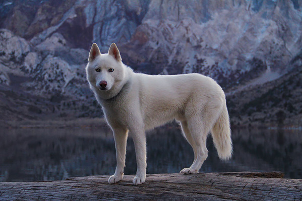 canine6