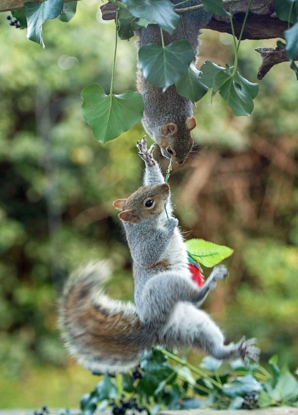 PAY-Squirrels-with-Valentines-Day-rose-4