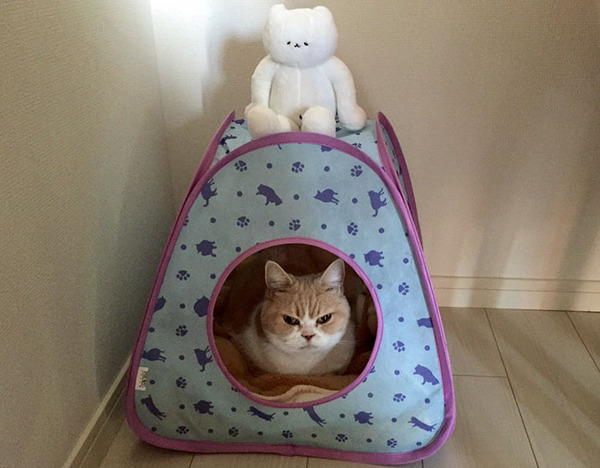 japanese-grumpy-cat-angry-koyuki-moflicious-29