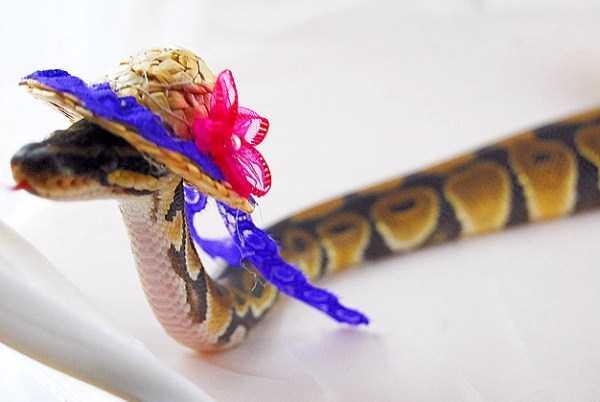cute-snakes-25