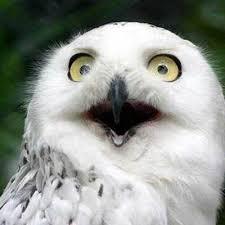 """【モンスト】遂に発表か!本日のモンストニュースで""""あのキャラ""""の獣神化に期待キタ━━━━(゚∀゚)━━━━!!"""