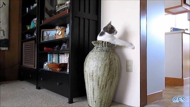落ち着くし楽しい、花瓶の中に入った猫たちが可愛い映像集