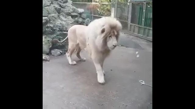 「消えた……だと!?」突然消え失せる不気味な存在に恐れおののくホワイトライオン