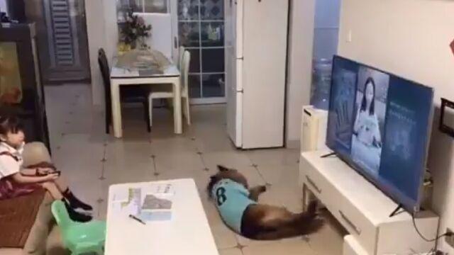 愛犬のおかげで危険を未然に回避した少女。どちらも賢い。