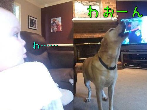 愛犬「わおーん」→5か月の赤ちゃん「わおーん」(動画)