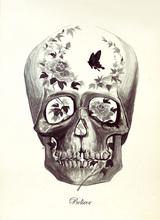 Skull Buterfly_480