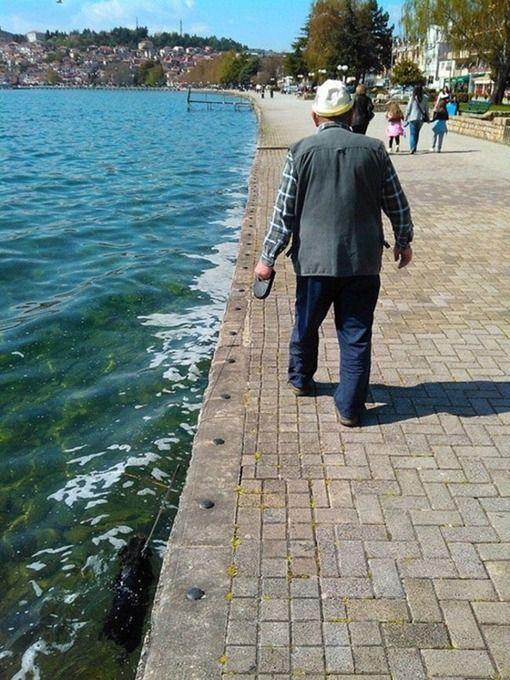 【悲報】老人の犬の散歩が斬新だと話題にwww