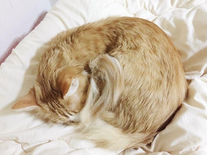 【画像あり】猫が寒そう
