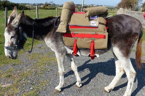 【画像】イギリスが発展途上国の人々の足であるロバ用の鞍を開発wwwwwww