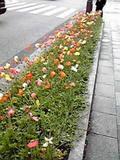 銀座通りの花壇