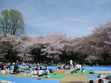2008年のお花見風景