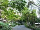 新宿中央公園の坂道