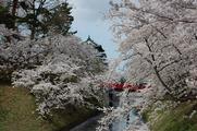 弘前の桜といえばこの構図