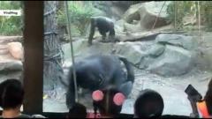 """子どもたちの前で動物園のゴリラが""""行為""""をはじめる 衝撃の展開に親たちが悲鳴 米"""