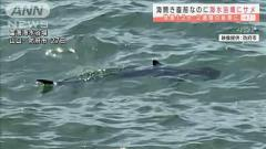 """海面から""""背びれ""""…海水浴場にサメ 海開き延期に 山口"""