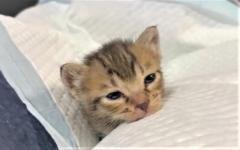 保護して2日目、子猫の寝落ちが可愛すぎてキュン♡ 「守りたいこの寝顔」「幸せそう」ネット悶絶