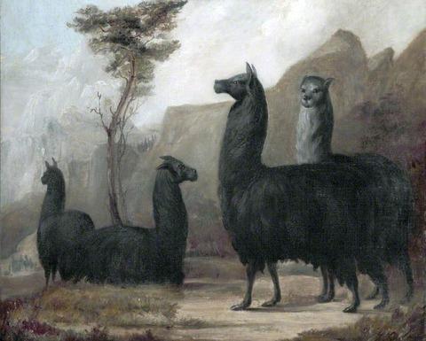 Jacques- Laurent Agasse, 'Alpacas' Victoria Gallery & Museum