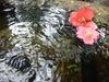 水盤にゆらり椿