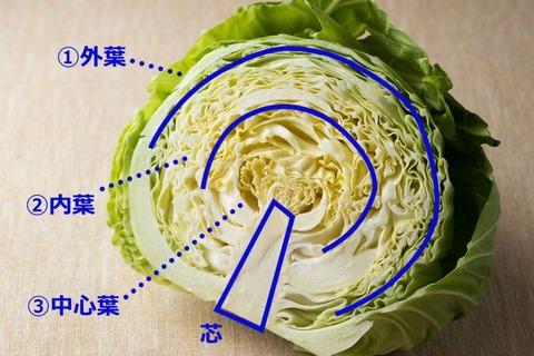 1612_54_cabbage_01-800x600-800x533
