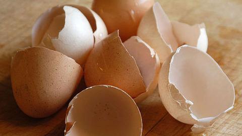 130926_eggshells-thumb-640x360-65868