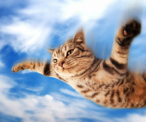 new_flying-cat
