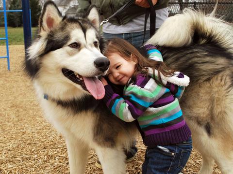com-adorable-animal-animals-beautiful-cute-1299381