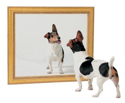 dog-mirror