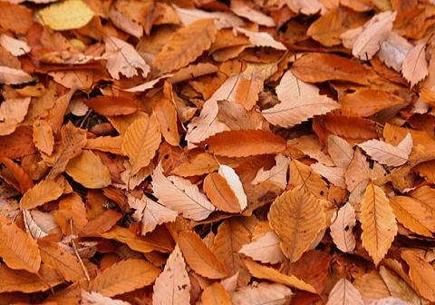 feuilles-mortes091207k