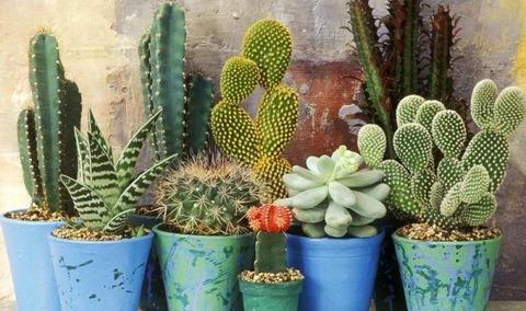 2_decoranco_con_cactus_y_suculentas_Decohunter-e1493132819246