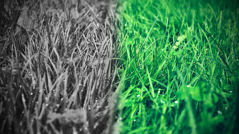 110331_greener-grass