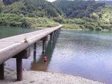 沈下橋泳ぐ