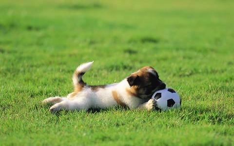 animal_dogs--07_01-1680x1050