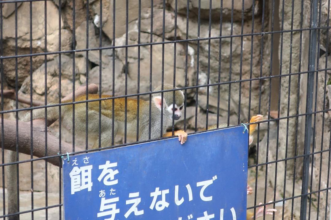 江戸川自然動物園 (2)