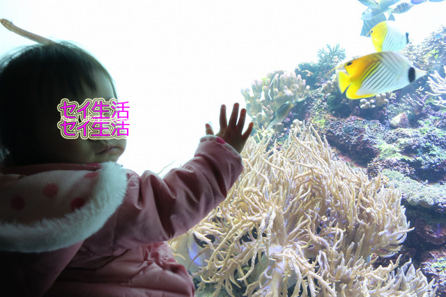 葛西臨海公園水族館 (17)