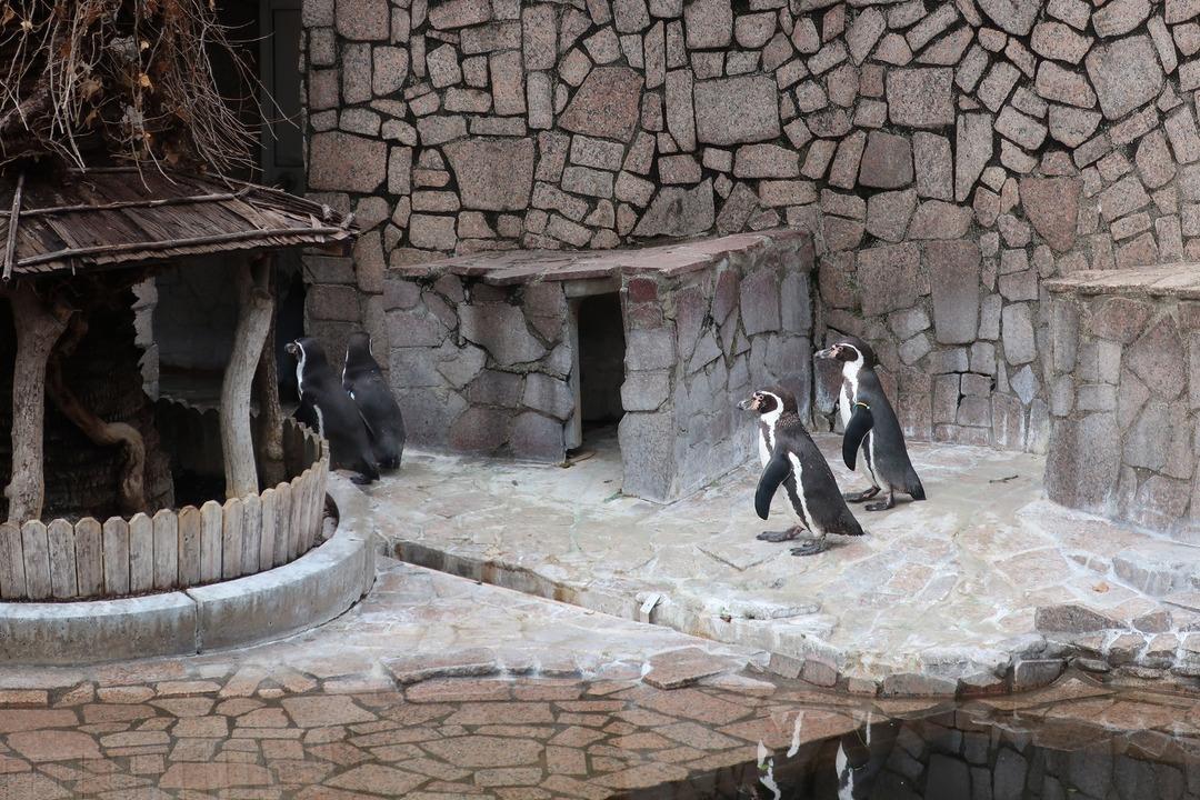 江戸川自然動物園 (13)